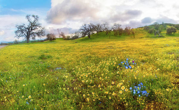 Photograph - Pops Of Baby Blue Eyes At Shell Creek - Superbloom 2019 by Lynn Bauer