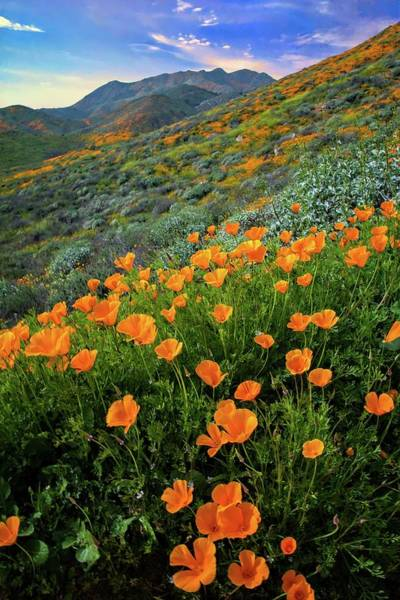 Photograph - Pops Of Poppies In Walker Canyon by Lynn Bauer