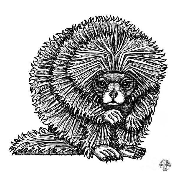 Drawing - Porcupine by Amy E Fraser