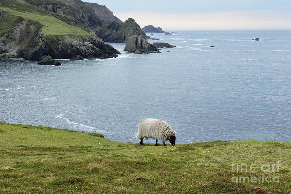 Photograph - Port Donegal by Peter Skelton