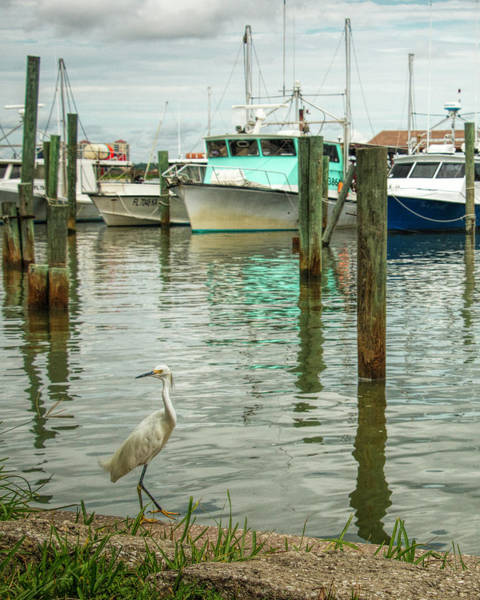 Photograph - Port Orange Habor by Dorothy Cunningham