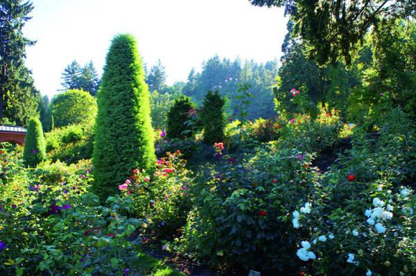 Wall Art - Photograph - Portland International Rose Test Garden by Art Spectrum