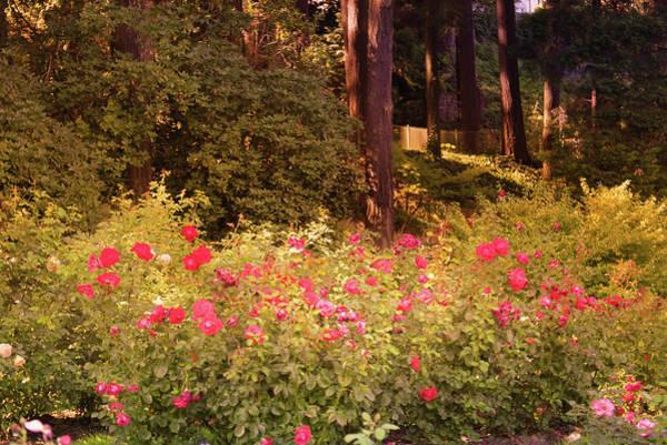 Wall Art - Photograph - Portland Rose Garden, Oregon by Art Spectrum