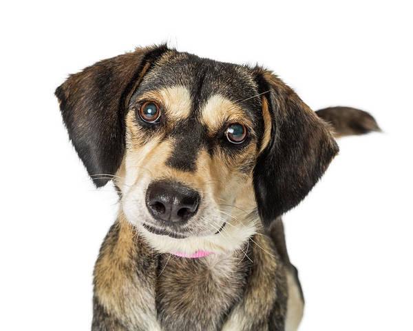 Wall Art - Photograph - Portrait Cute Medium Size Crossbreed Dog by Susan Schmitz