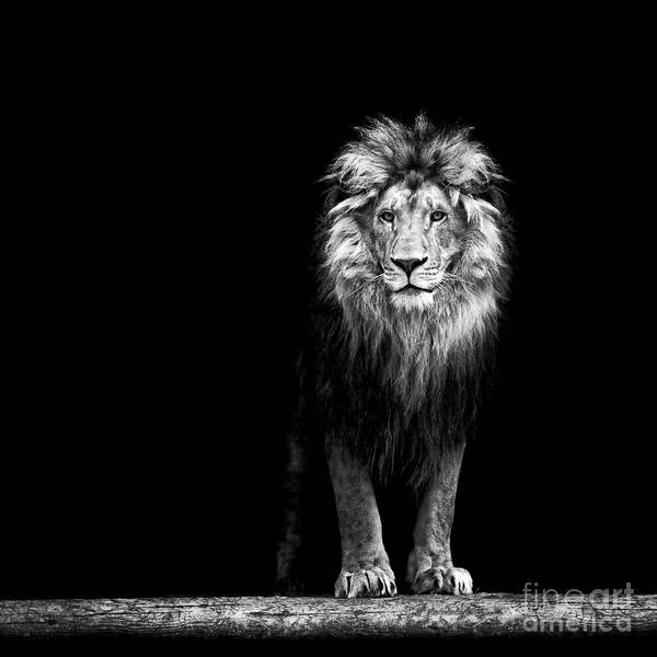 Portrait Of A Beautiful Lion, In The Art Print by Baranov E