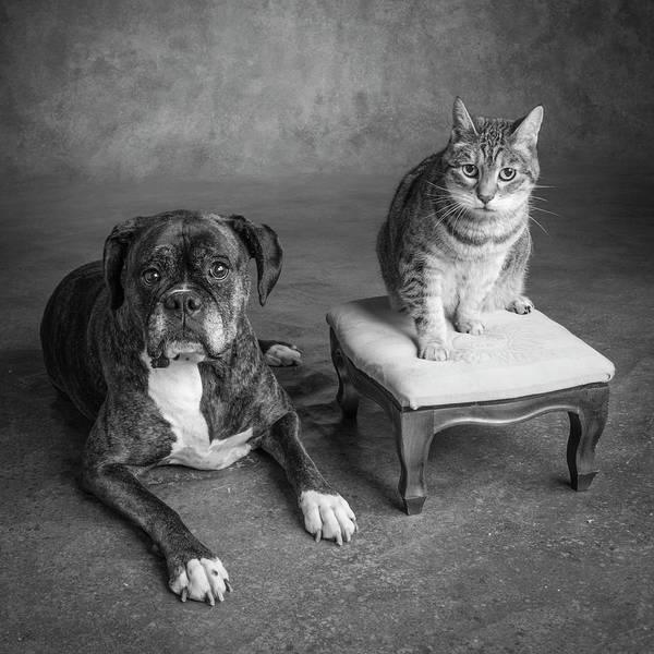 Wall Art - Photograph - Portrait Of A Boxer Dog And A Tabby Cat by Panoramic Images