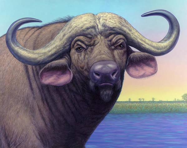 Painting - Portrait Of A Cape Buffalo by James W Johnson
