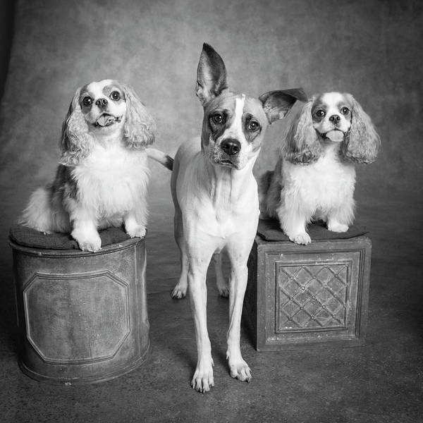 Wall Art - Photograph - Portrait Of A Cattle Dog And Cavalier by Panoramic Images