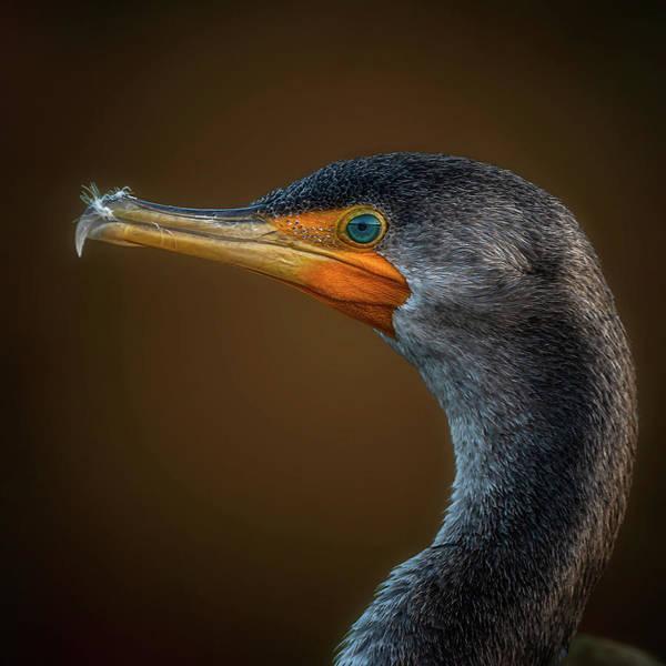 Photograph - Portrait Of A Cormorant by Cyndy Doty