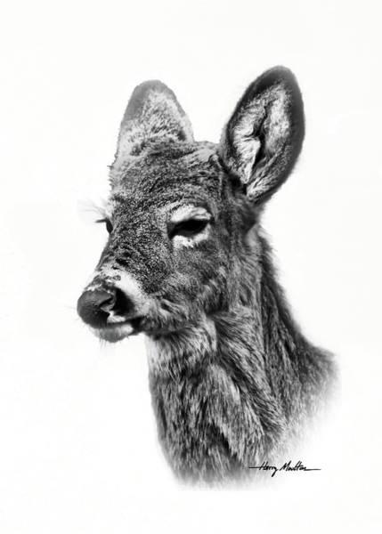 Photograph - Portrait Of A Deer by Harry Moulton