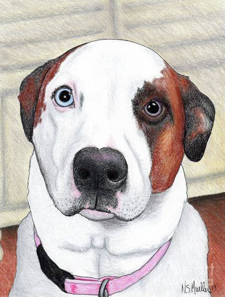 Mutt Drawing - Portrait Of A Dog Named Dave by Nancy Mueller