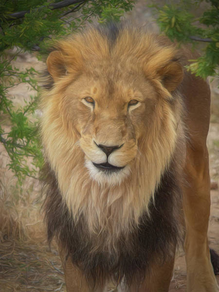 Mixed Media - Portrait Of A King By Tl Wilson Photography by Teresa Wilson