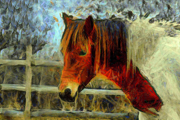 Photograph - Portrait Of A Pinto Horse by Floyd Snyder