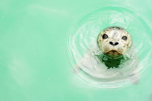 Wall Art - Photograph - Portrait Of A Seal In Water by Jaime Kowal