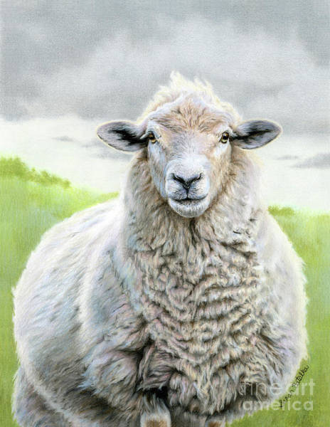 County Fair Painting - Portrait Of A Sheep by Sarah Batalka