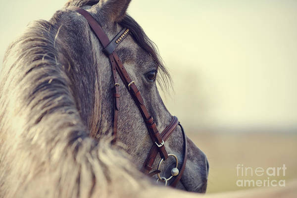 Wall Art - Photograph - Portrait Of A Sports Stallion In A by Elya Vatel