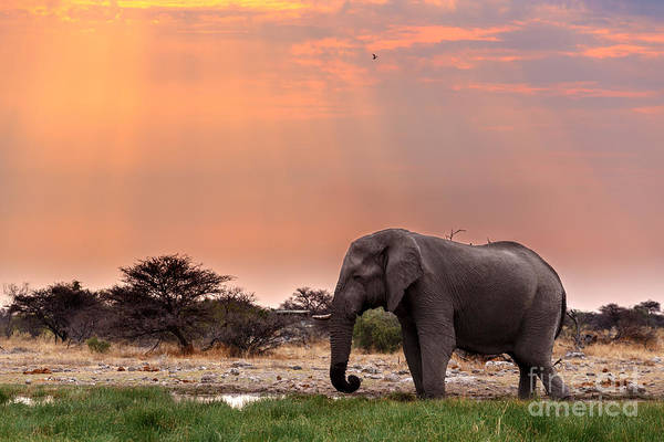 Reserve Wall Art - Photograph - Portrait Of African Elephants With Dusk by Artush