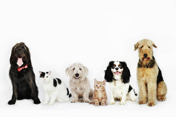 Photograph - Portrait Of Cats And Dogs Sitting by Flashpop
