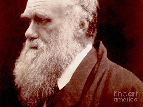 Wall Art - Photograph - Portrait Of Charles Darwin, 1859 Photo by English School