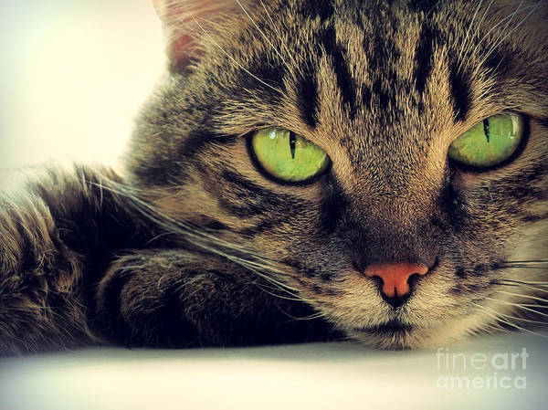 Portrait Of Green-eyed Cat Art Print