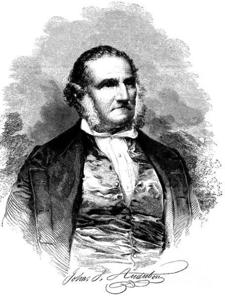 Wall Art - Drawing - Portrait Of John James Audubon  by American School