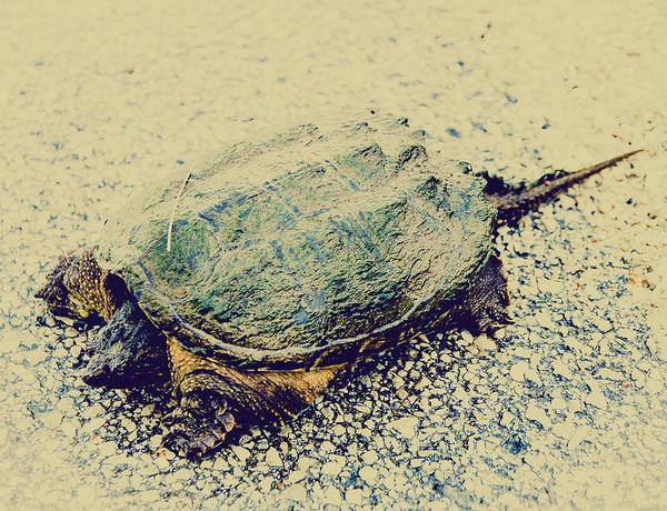 Snapping Wall Art - Photograph - Portrait Of Snapping Turtle by Hyuntae Kim