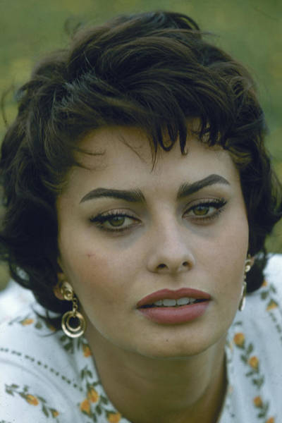 Sex Symbol Photograph - Portrait Of Sophia Loren by Loomis Dean