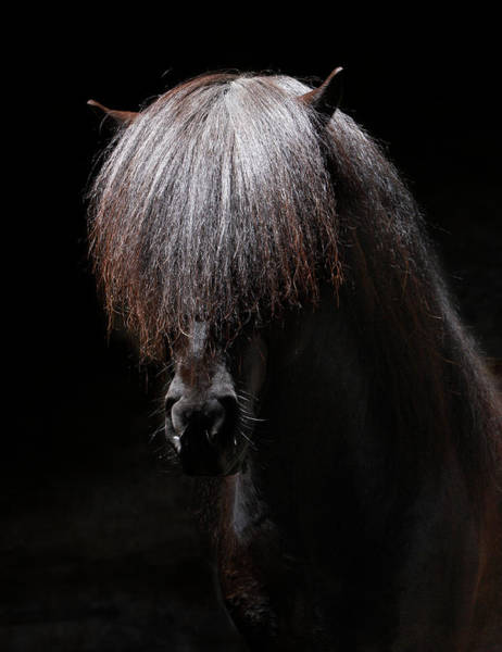 Bang Photograph - Portrait Of Stallion by Arctic-images