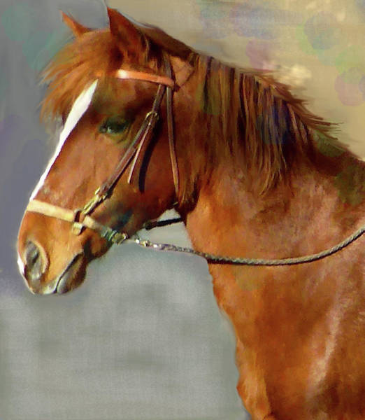 Mixed Media - Portrait Of The Paso Fino Mare - Fierce And Gentle by Patricia Keller