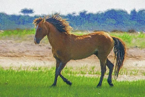 Photograph - Portrait Of Wild Horse  Paintography by Dan Friend