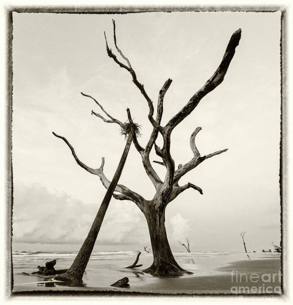 Bulls Island Photograph - Postcard From The Edge by DiFigiano Photography