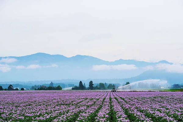 Digital Art - Potato Field At Skagit Valley by Michael Lee