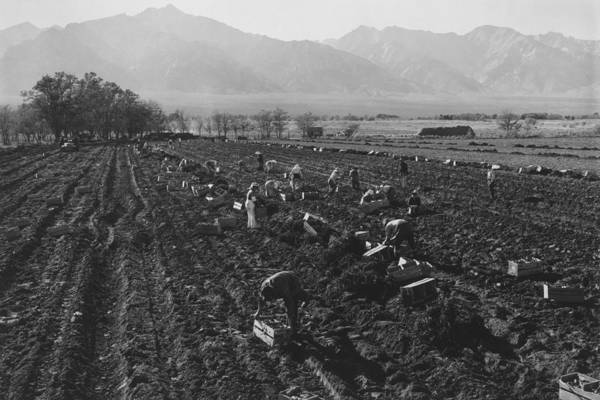 Photograph - Potato Fields by Buyenlarge