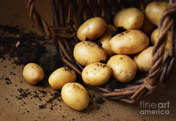 Raw Wall Art - Photograph - Potatoes In A Wicker Basket With Soil by Pinkyone