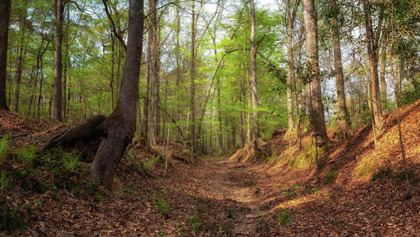 Photograph - Potkopinu Trail by Susan Rissi Tregoning