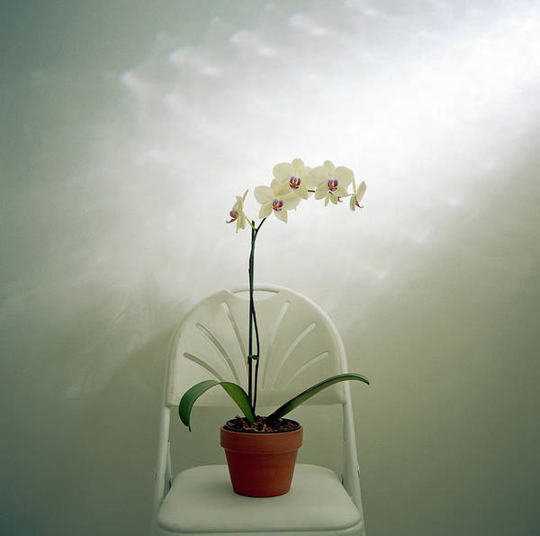 Chair Photograph - Potted Orchid Plant On Folding Chair by Victoria Snowber