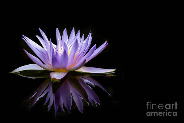 Photograph - Powerful Purple Water Lily by Sabrina L Ryan