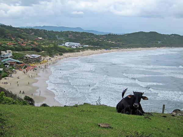 Sea Cow Photograph - Praia Do Rosa by Rm Nunes Photography