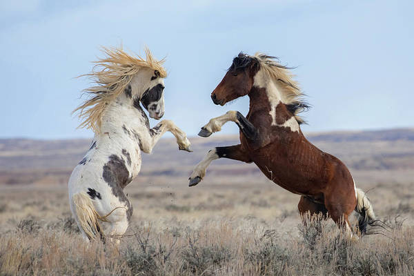 Wall Art - Photograph - Prairie Dance by Sandy Sisti
