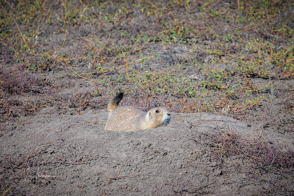 Photograph - Prairie Dog by Jim Thompson