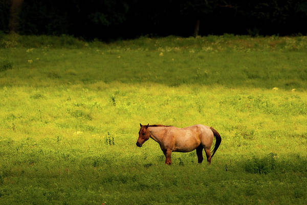 Photograph - Prairie Horse by Jeff Phillippi