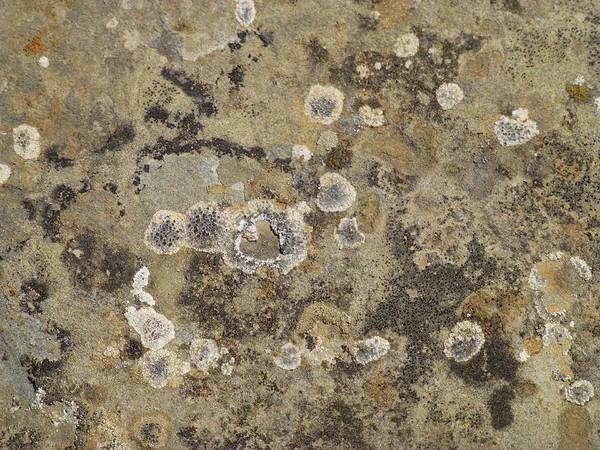 Photograph - Prairie Pollock by Cris Fulton
