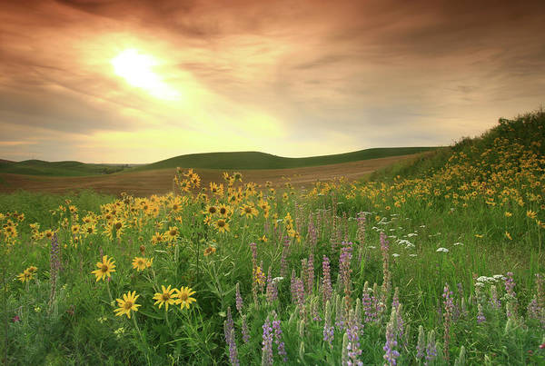 Photograph - Prairie Wildflowers On The Great Plains by Imaginegolf