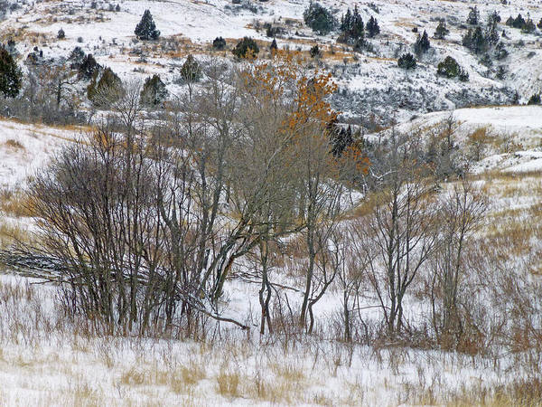Photograph - Prairie Winter Reverie by Cris Fulton