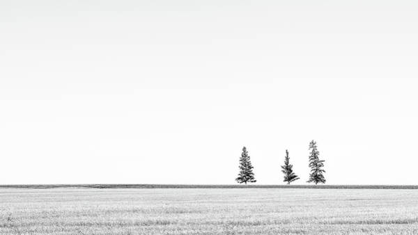 Photograph - Prairie Woodland by Hamish Mitchell