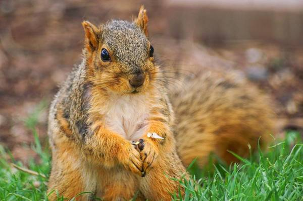 Photograph - Praying Squirrel by Don Northup