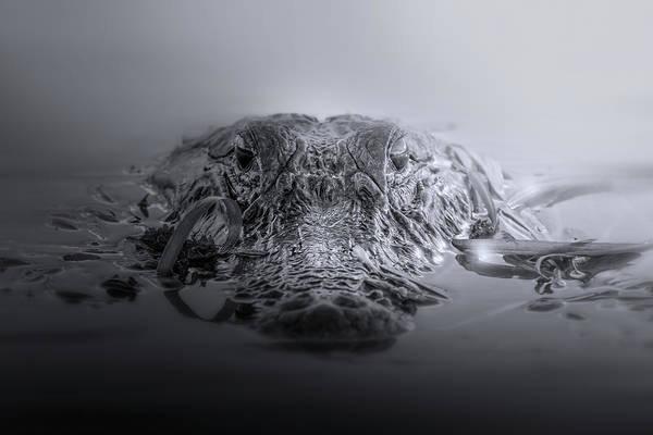 American Crocodile Photograph - Predator by Mark Andrew Thomas