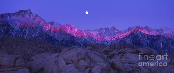 Photograph - Predawn Alpenglow On The Sierras From The Alabama Hills California by Dave Welling