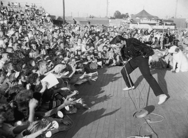 Photograph - Presley Performs by Hulton Archive