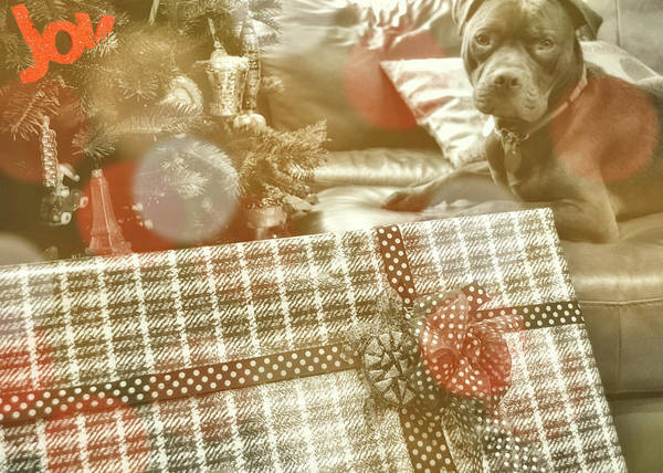 Photograph - Pressies For Benny by JAMART Photography